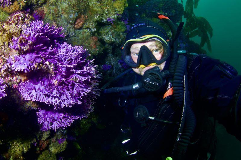 purple coral diving farnsworth banks california